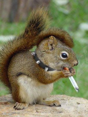 squirrel smoking