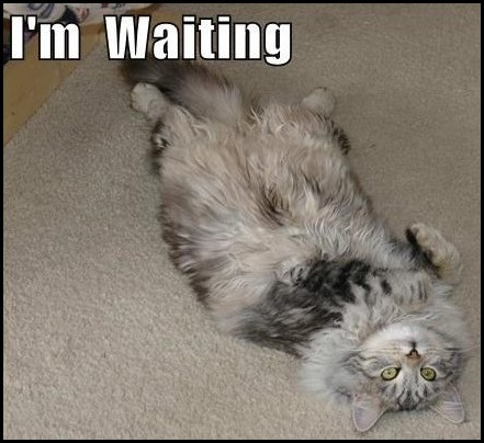 waiting-feature